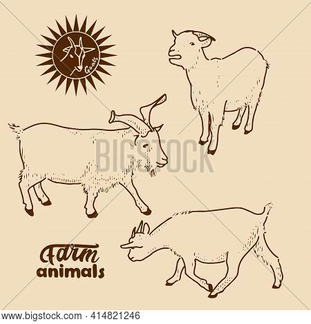Domestic Goats. Vector Illustration In Retro Style Of Farm Animals-goats In Different Poses.