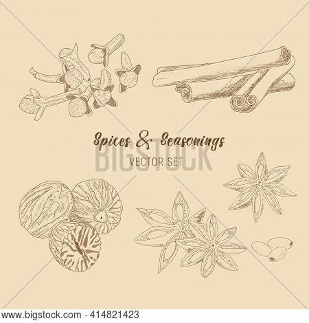 A Set Of - Cinnamon, Star Anise, Cloves, Nutmeg. Vector Sketch Illustration.