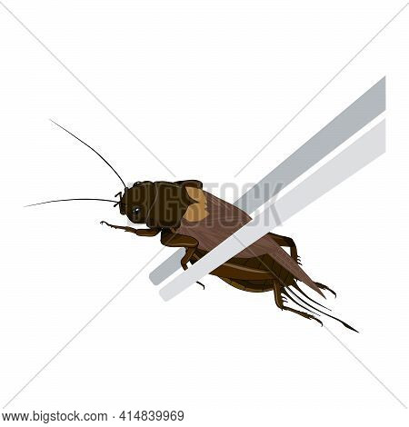 Food Insects: Crickets Insect Deep-fried Crispy For Eating As Ready Meal Food Items On Wooden Chopst