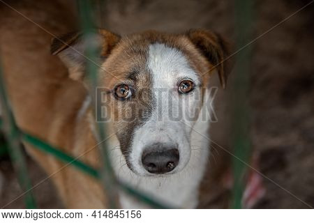 Closeup Portrait Sad Gentle Glance Dog Locked In The Metal Cage. Homeless Dogs Concept