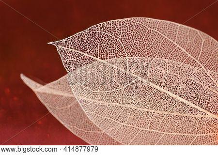 Skeleton Leaves.skeletonized Yellow Leaf On Red Glitter Background .wallpaper Phone Shining Glitter.