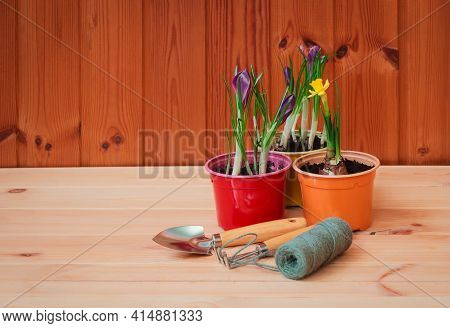 Gardening Tools,  Purple Crocuses And Daffodil On Wooden Table. Selective Focus. Concept Of Spring G
