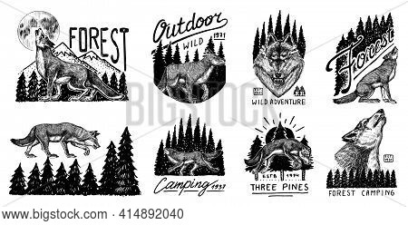 Gray Wolf Logo And Badge. Forest And Mountain And Hill. Double Exposure Concept. A Predatory Beast.