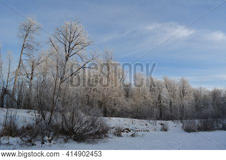 Beautiful Winter Landscape With Trees In Hoarfrost On The Bank Of Snowy Lake
