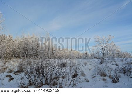 Winter Landscape. Trees, Shrubs And Herbs Are Covered By Hoarfrost.