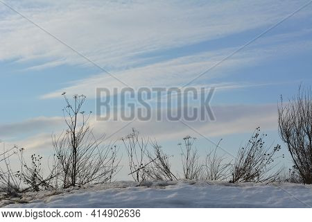 Beautiful Winter Landscape With Silhouettes Of Dry Herbs On The Background Of Sky.