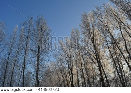 Wintertime Landscape. Trees Covered With Hoarfrost On The Background Of Blue Sky.
