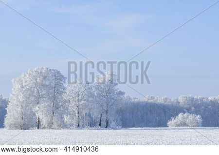 Aerial Shot of  Snow White Forest Covered With Hoarfrost.