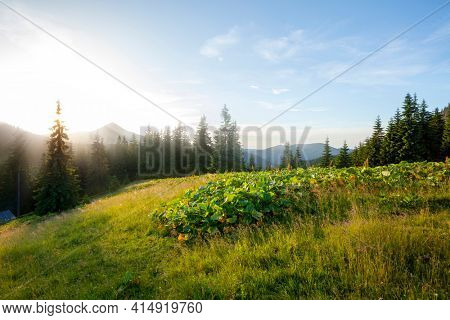 Summer mountain forest landscape at sunset