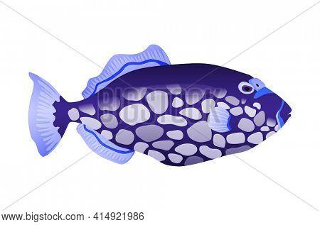 Decorative sea or aquarium fish on white background. Freshwater or saldwater aquarium cartoon fish. Variet of ornamental popular fish