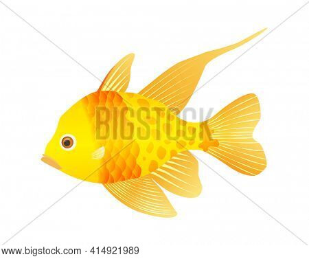 Decorative sea or aquarium fish on white background. Freshwater or saldwater aquarium cartoon fish. Variet of ornamental popular fish. Gold fish