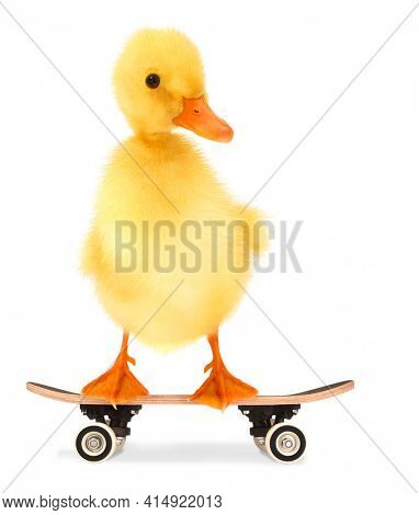 Cute cool duckling with skateboard funny conceptual image