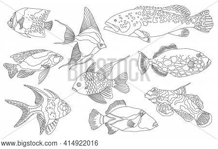 Tropical sea and aquarium fishes collection on white background. Set of freshwater and saldwater aquarium cartoon fishes. Varieties of ornamental popular fish in sketch line drawing style