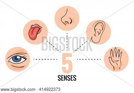 Sensory organs. Nose smell, eyes vision, ears hearing, skin touch, language taste and taste buds. Cartoon sensory organs. Perception of environment, sensations