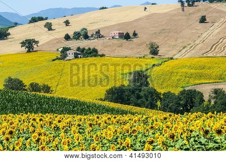 Marches (Italy) - Landscape at summer near Cingoli poster