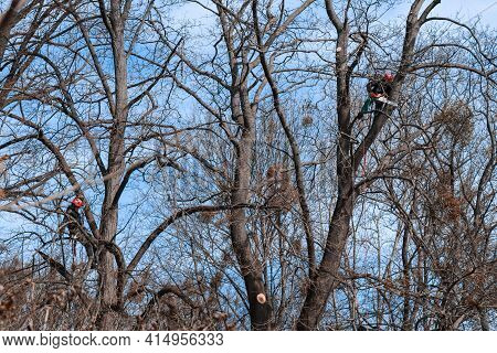 Kyiv, Ukraine 03.25.2021: Two Professional Workers Are Sitting On A Tree And With A Chainsaw Sawing