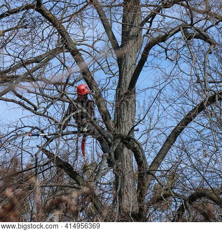 Kyiv, Ukraine 03.25.2021: Professional Worker Sitting On A Tree And With A Chainsaw Sawing Dry, Old,