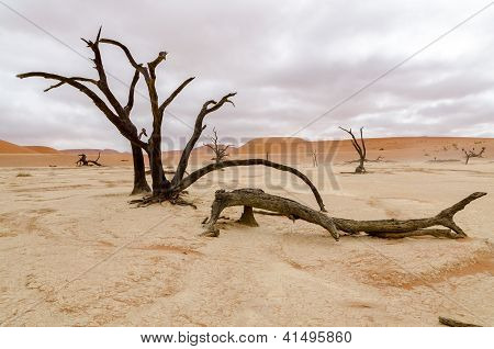 Dead trees in Deadvlei, Namibia