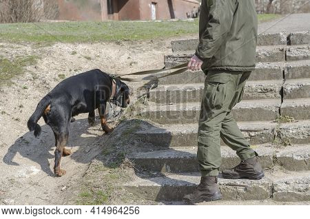 A Military Officer With A Pet Patrolling A City Street. A Man In Uniform With A Service Rottweiler O