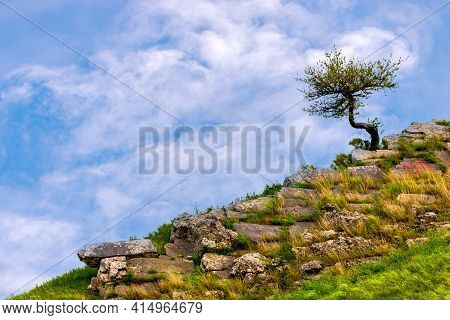 Lonely Tree On The Slope Of Hill Or Mountain At Beautiful Landscape.