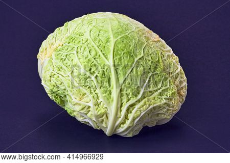 Savoy Cabbage On A Dark Blue Background, Front View. In Front Of The Green Curly Cabbage.