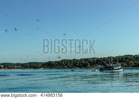 Fishing Boat With Seagulls Flying Around. Ship Sailing To Port.commercial Fishing Boat In Croatia. S