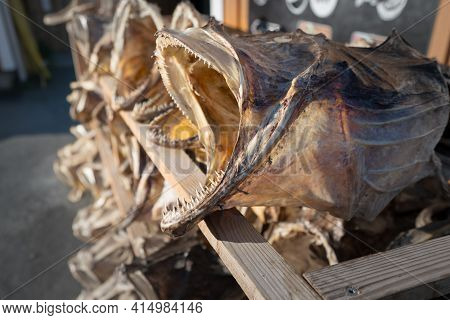 Closeup Of A Lot Of Big, Dried Fish With Open Mouth And Sharp Teeth Laid In A Wooden Stand In Fisher