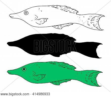 Sketch Green Sea Fish In Sketch Style On Deep Green Background. Abstract Background. Colorful Backgr