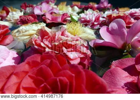 Colorful Flowers Floating On Water Surface Background