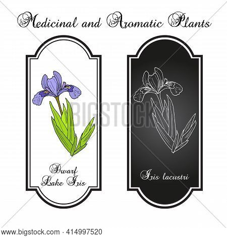 Dwarf Lake Iris Iris Lacustris , State Flower Of Michigan. Hand Drawn Botanical Vector Illustration