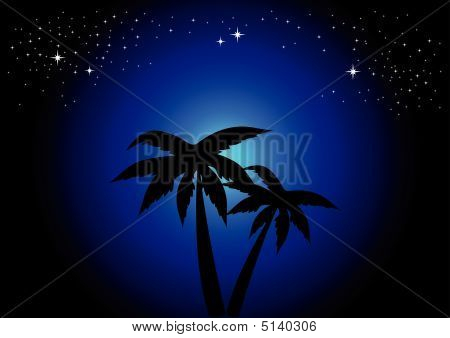 Palmtrees At Night