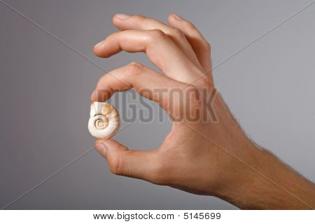 Shell In Man's Hand