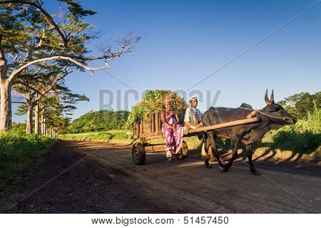 Malagasy Couple And Zebu Cart