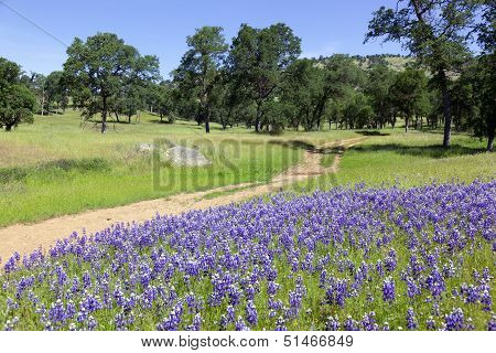 Lupines On Country Landscape