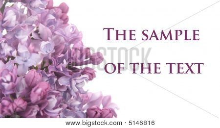 Background With A Lilac