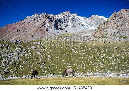 Two pasturing horses at sunny day in mountains