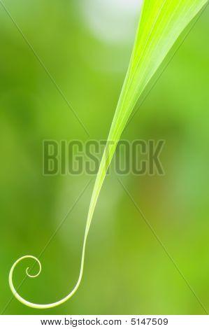 Curvy Leaf
