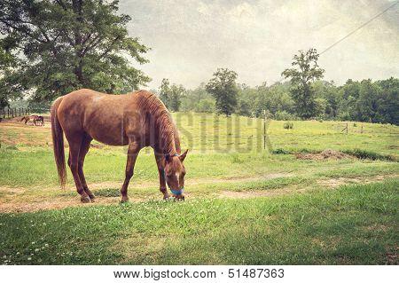 Chestnut Horse In Rural Setting Textured Landscape