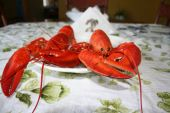 Cooked lobster on a plate waiting to be ate poster