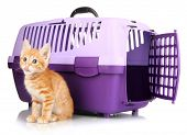 Cute little red kitten with travel plastic cage isolated on white poster