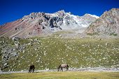 Two pasturing horses at sunny day in high snowy mountains, Tien Shan, Kyrgyzstan poster