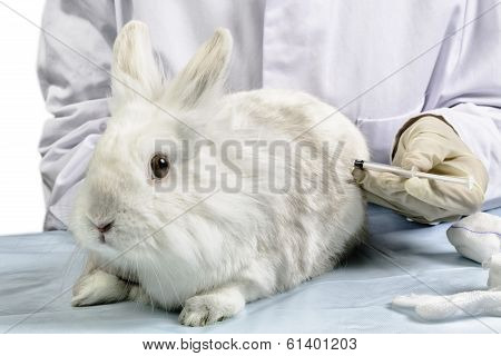 white bunny get syringe