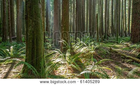 British Columbia Forest