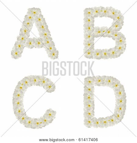 Letters Made Of Tropical Flowers Frangipani (plumeria) Isolated ,abcd