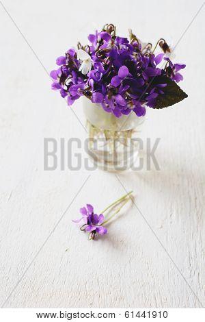 Beautiful Fresh Violets
