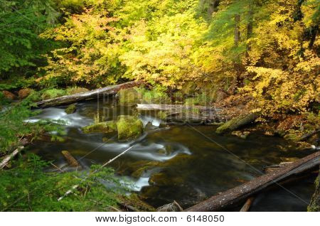 Stream With Autumn Leaves