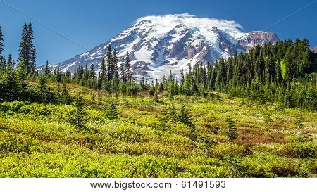 Mount Rainier from the Paradise viewpoint