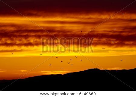 Birds flying off in the sunset