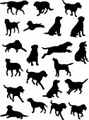 vector silhouettes of Labrador dog in various poses poster