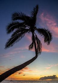 Tropical sunset palm